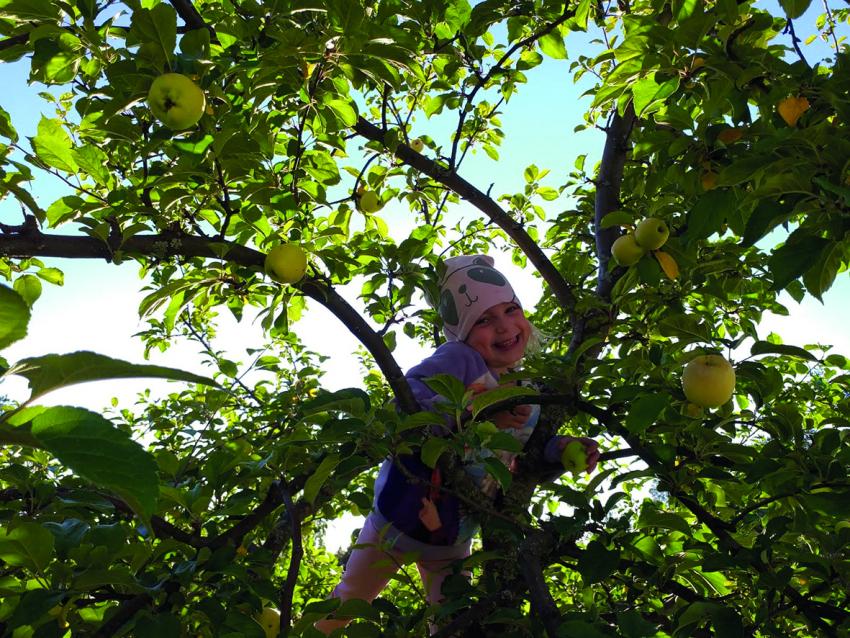 Lapsi omenapuussa