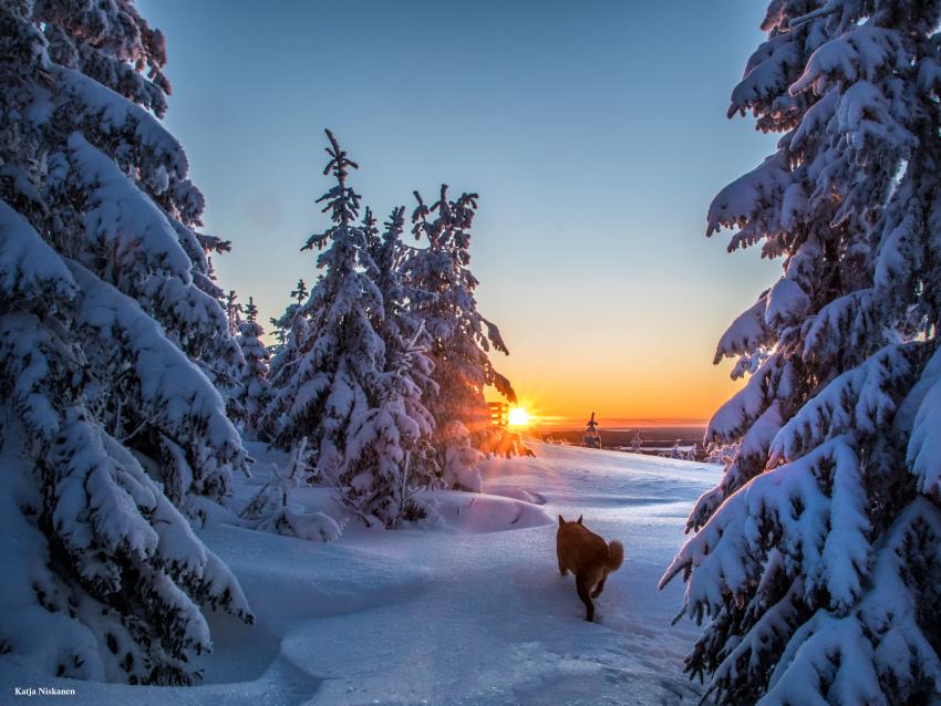 Talvinen Kivesvaara